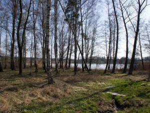 Chalupa Ještěrka - Les a rybník za chalupou