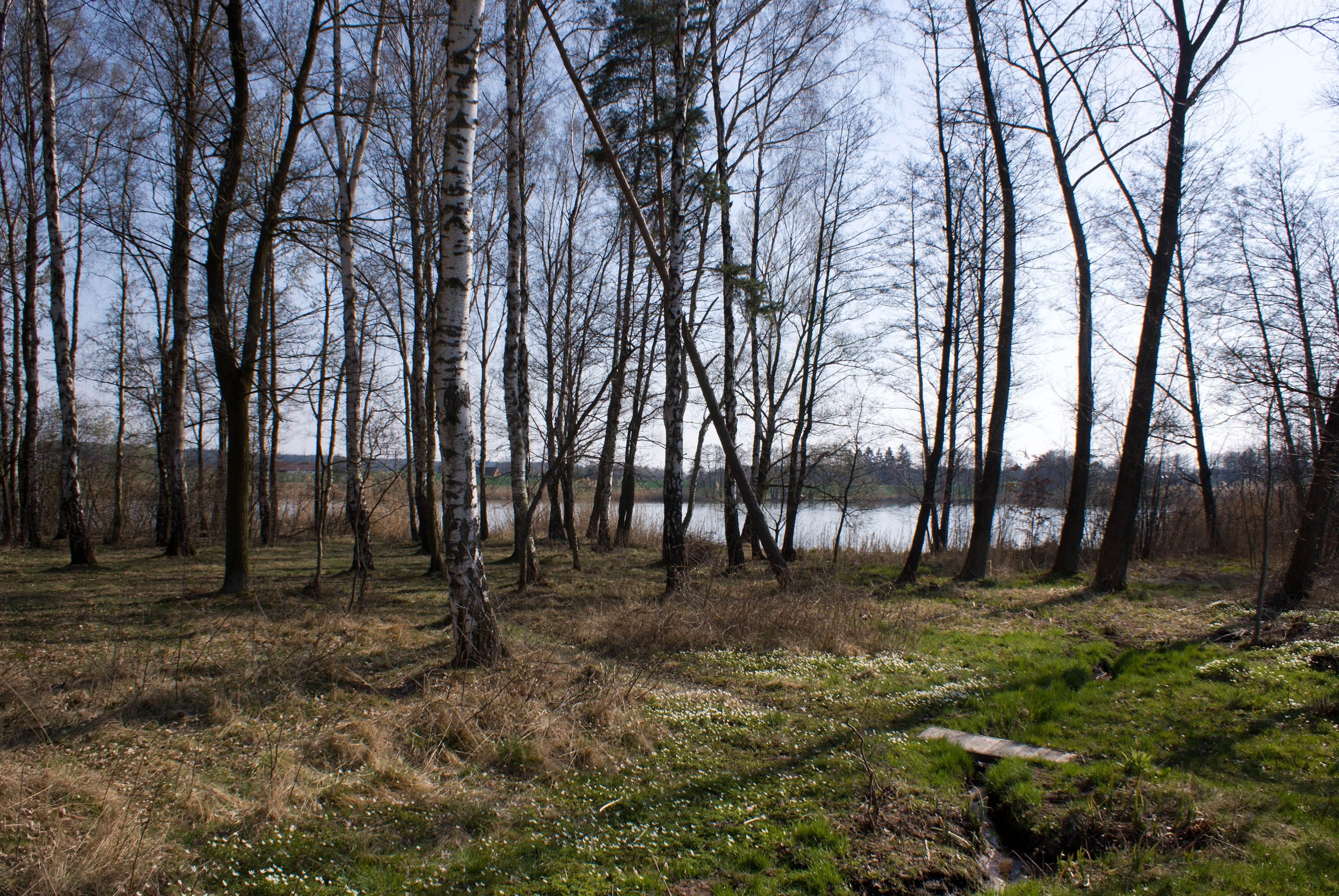 Les a rybník za chalupou