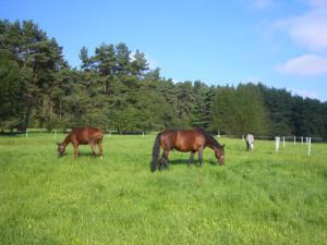 Pension Vital   Vital-Park Drahotín - koně na pastvě  Vital-Park