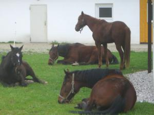 Pension Vital   Vital-Park Drahotín - relax i pro zvířata