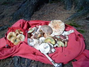 Chalupa Rajnochovice - ráj pro houbaře