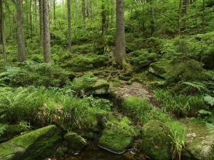 Chalupa Pod Rozhlednou - Boubínský prales