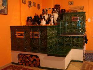 Chalupa Janské Lázně - kachlová pec v kuchyni se živými psími návštěvníky