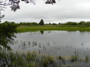 Penzion u Radnice -  okolí penzionu -rybníky CHKO Třeboňsko