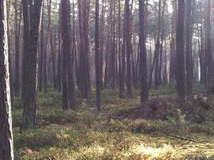 Penzion u Radnice - okolní lesy CHKO Třeboňsko