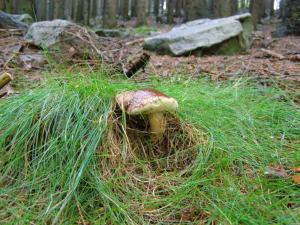 Chata Skalka - V lese
