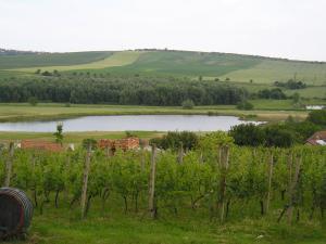 Chalupa Bořetice - Rybník v Bořeticích u hustopeč na Jižní moravě